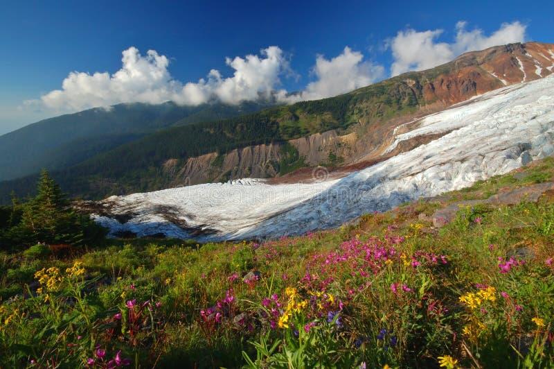 Machtige gletsjer in de zomer stock foto's