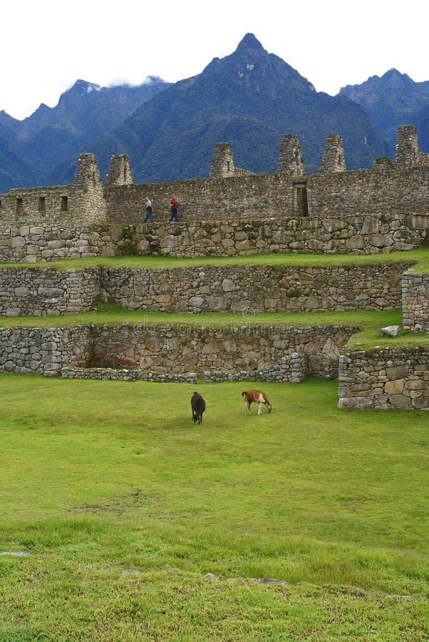 machu秘鲁picchu 免版税库存图片