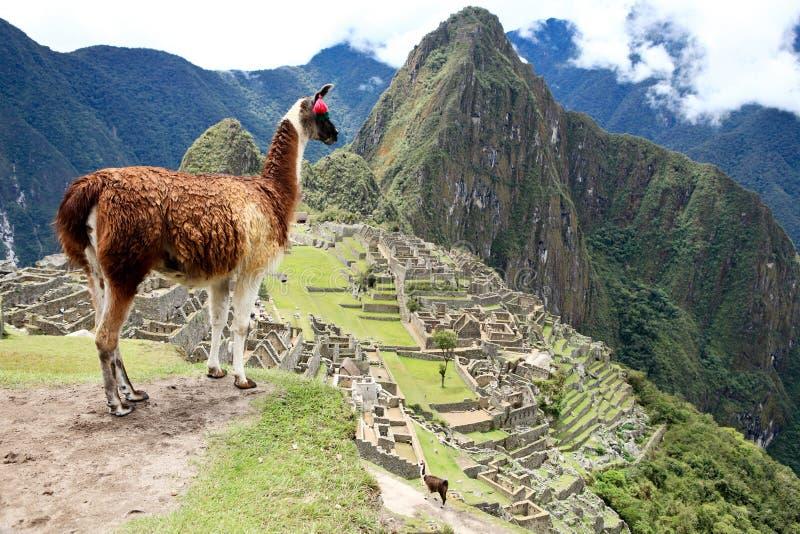machu秘鲁picchu 图库摄影