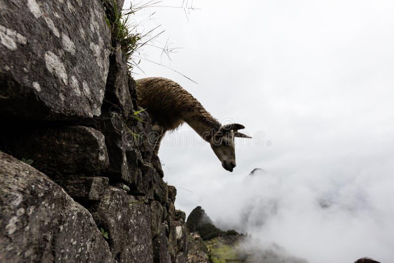 Machu Picchu, Перу стоковые фото