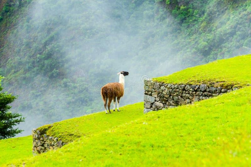 Machu Picchu, руины Incas в Андах на Cuzco, Перу стоковое фото rf