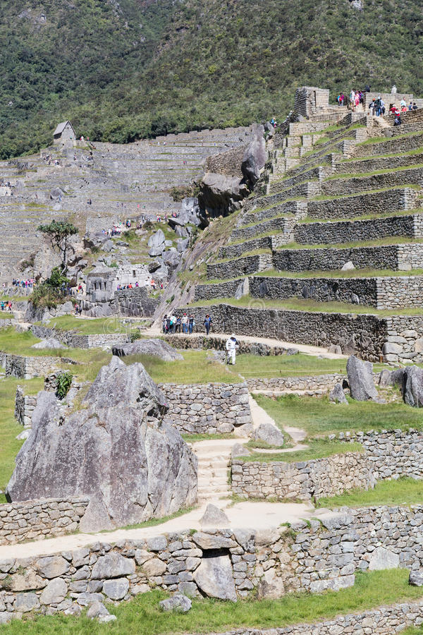 Machu Picchu, Aguas Calientes/Peru - circa Juni 2015: Terrasser av Machu Picchu den sakrala borttappade staden av Incas i Peru arkivfoto
