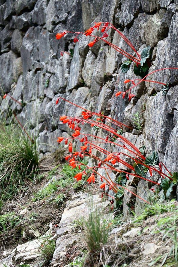 Machu Picchu blommor royaltyfria foton