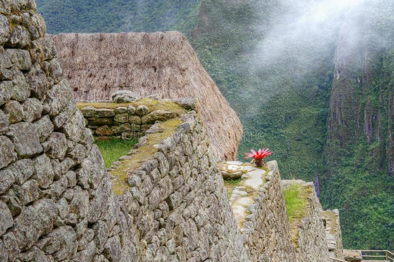 Machu Picchu close-up view to stone walls with flower. Machu Picchu in Cusco, Peru; detailed view of the stone walls on terraces, in summer. Cactus flower on a royalty free stock photo