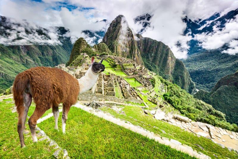 Machu Picchu, Cusco, Peru i Sydamerika fotografering för bildbyråer