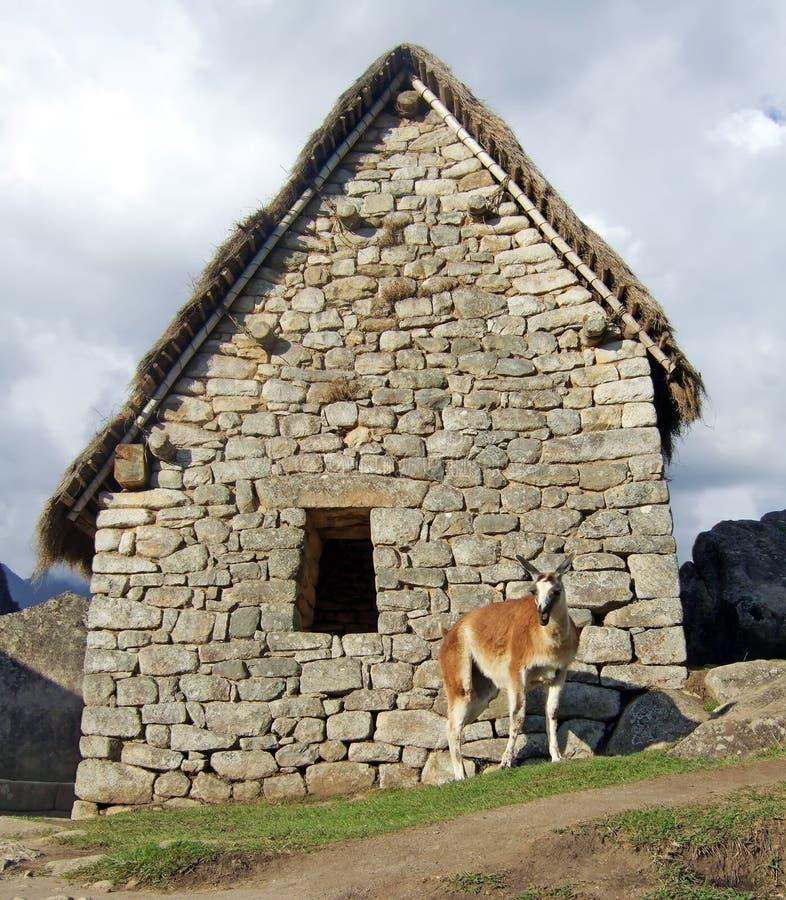 Download Machu Picchu Lama stock photo. Image of dwelling, cusco - 5975534