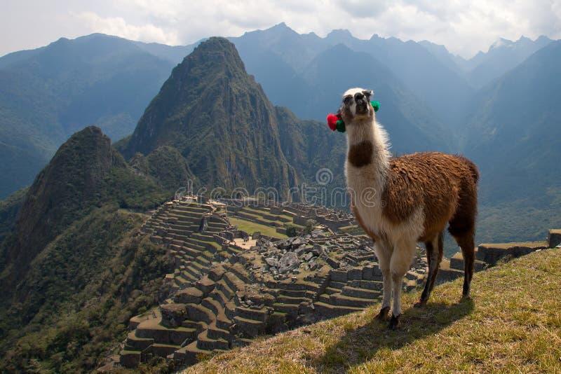 Machu Picchu (Peru) imagem de stock