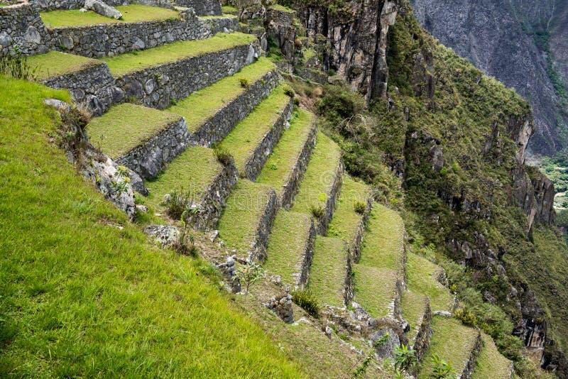 Machu Picchu Peru, jordbruks- terrasser royaltyfria bilder