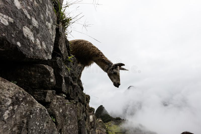 Machu Picchu , Peru stock photos