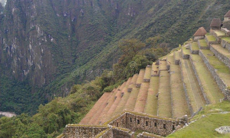 Machu Picchu terrasser royaltyfri foto