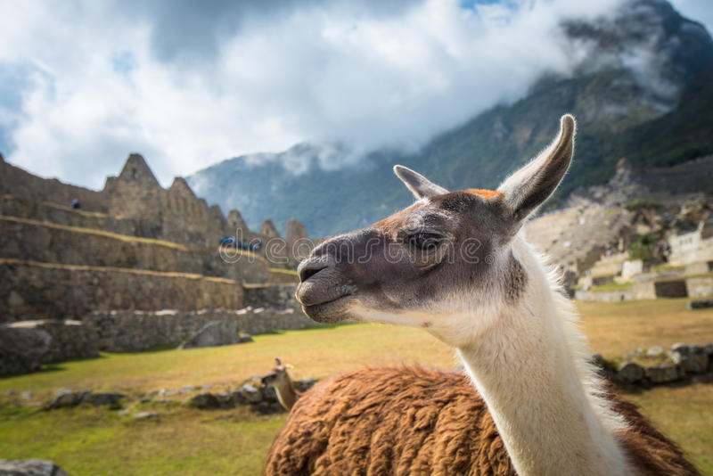Machu Picchu, UNESCO World Heritage Site stock images