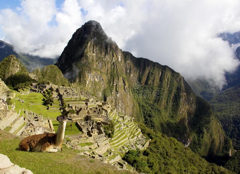 Machu Picchu, Vicuña op de hoogten! stock afbeelding