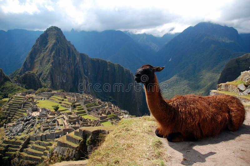 Machu Picchu y el lama imagen de archivo