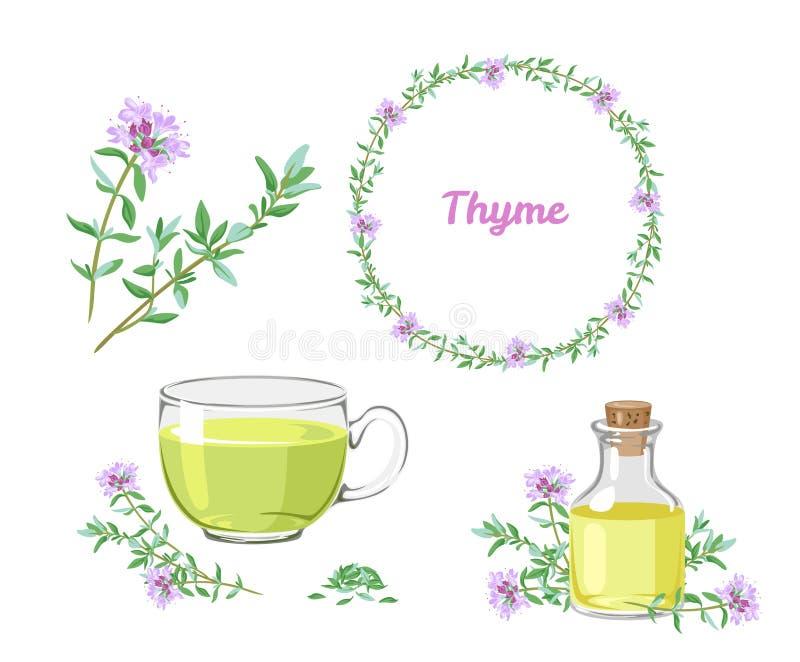 Macierzanka set Sprigs leczniczy ziele, fragrant istotny olej, tymiankowa herbata, kwiecisty ziołowy wianek royalty ilustracja