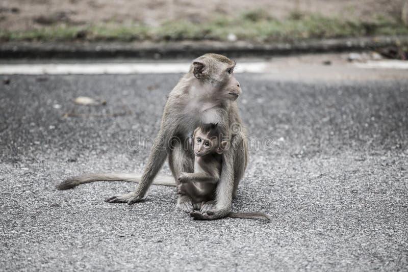 Macierzysta małpa z jej dzieckiem na ulicie w mieście z ciemnym brzmieniem obraz royalty free