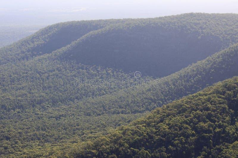 Macierzysta roślinność w Parku Narodowym Grampians w Australii obraz stock