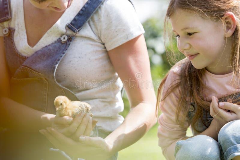 Macierzystego seansu mały kurczątko dziewczyna przy gospodarstwem rolnym fotografia royalty free