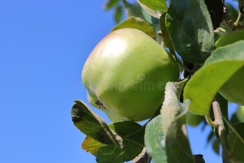Macintosh im Freien Apple lizenzfreie stockfotografie