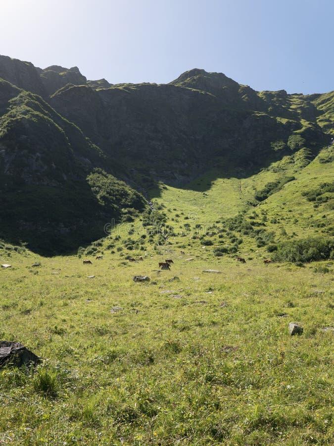 Macizo alpino, barranco alpino hermoso en Austria Valle alpino de Gastein en verano imágenes de archivo libres de regalías