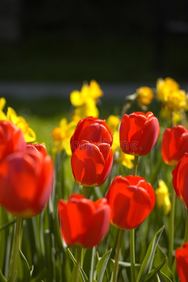 Macizo de flores foto de archivo libre de regalías
