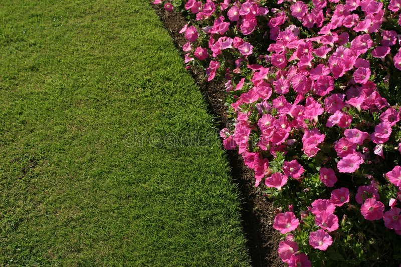Macizo de flores fotografía de archivo libre de regalías