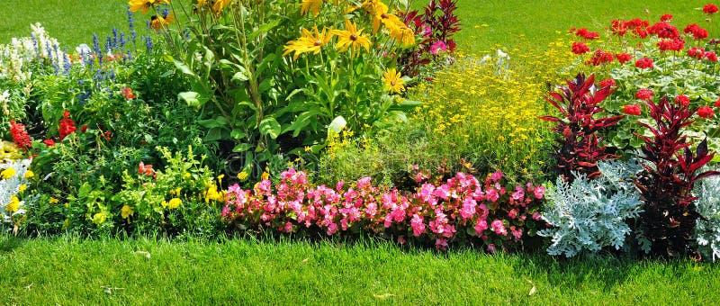 Macizo de flores del verano y césped verde Foto ancha imagen de archivo libre de regalías