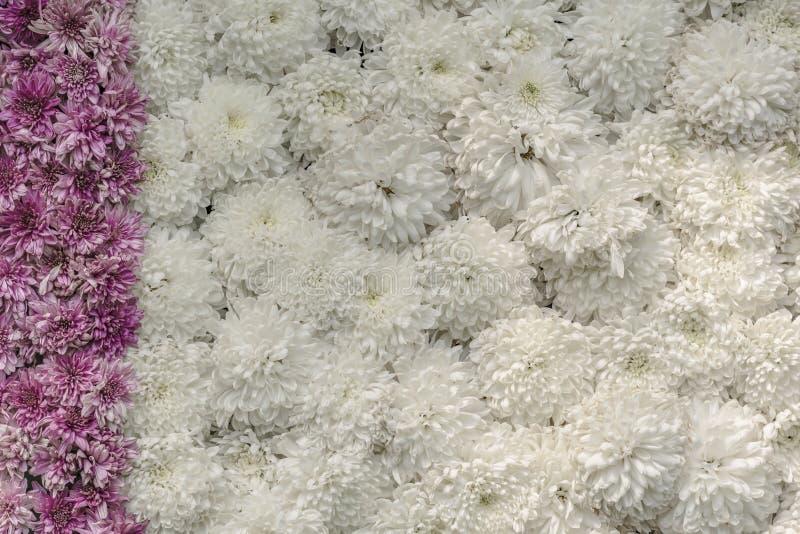 Macizo de flores/pared de flores - exhibición adornada fotografía de archivo
