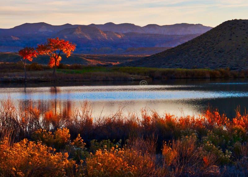 Mack Mesa Fall royaltyfria foton