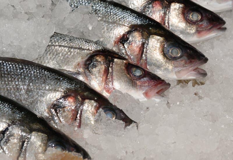 mackeral鱼贩子的冰 免版税图库摄影