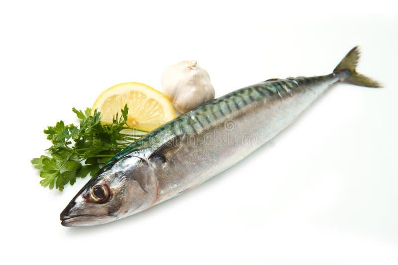 Mackerel stock photos