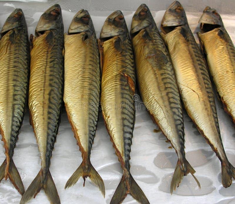 Mackerel stock image