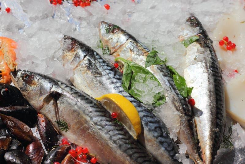 Mackerel chilled on ice royalty free stock image