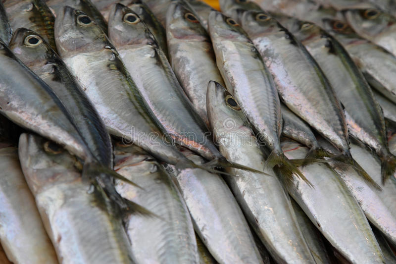 Mackerel Fish royalty free stock photos