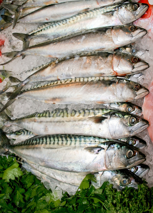 Free Mackerel Fish Stock Photos - 2131263