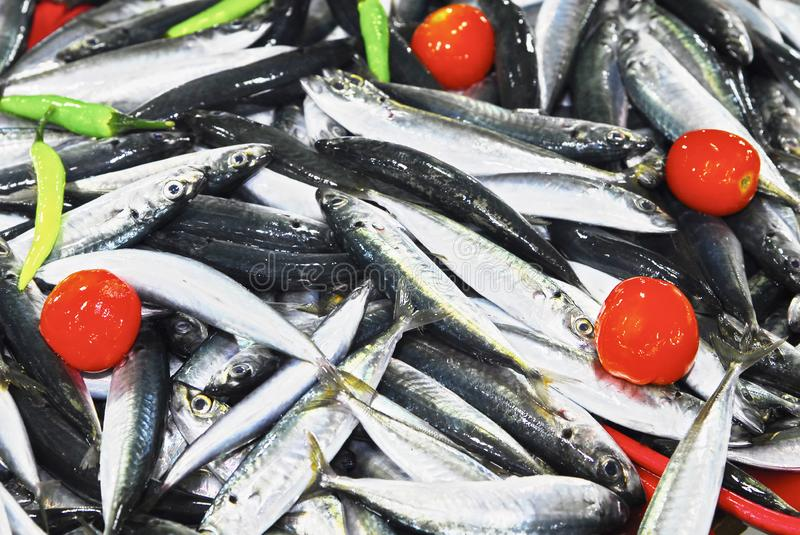Mackerel fish at the Central Market in Puerto Princesa City, Philippines. Plenty of mackerel, Galunggong fish on a tray, decorated with tomatoes and chili, at royalty free stock image