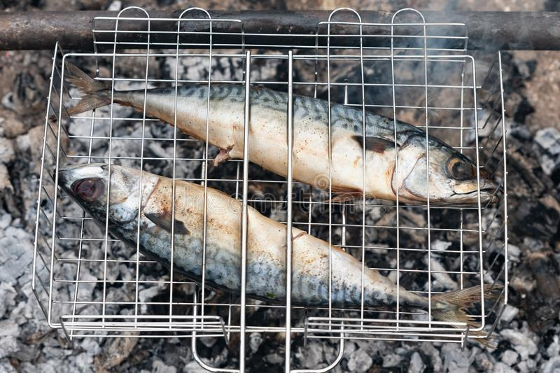 Mackerel fish fresh and tasty grilled on fire at garden party royalty free stock image