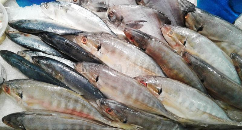Mackerel fish on the glass dish In the supermarket. food royalty free illustration