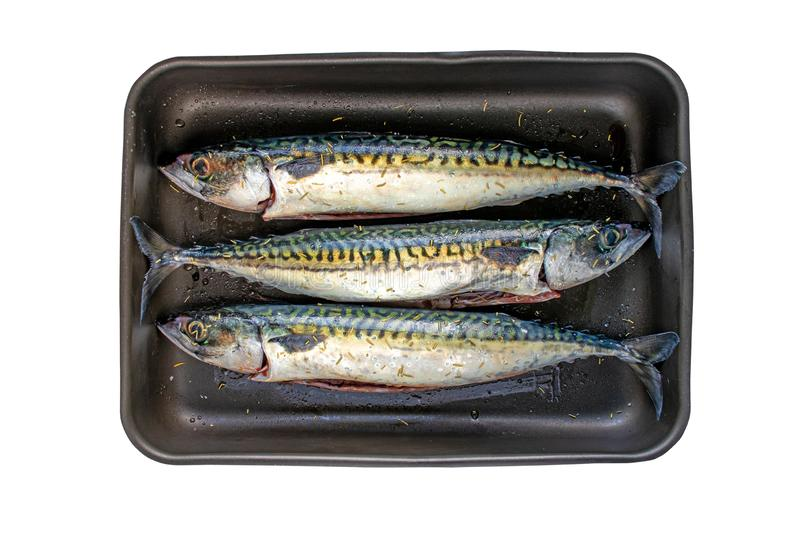 Mackerel fishes in the roaster isolated on white royalty free stock photo