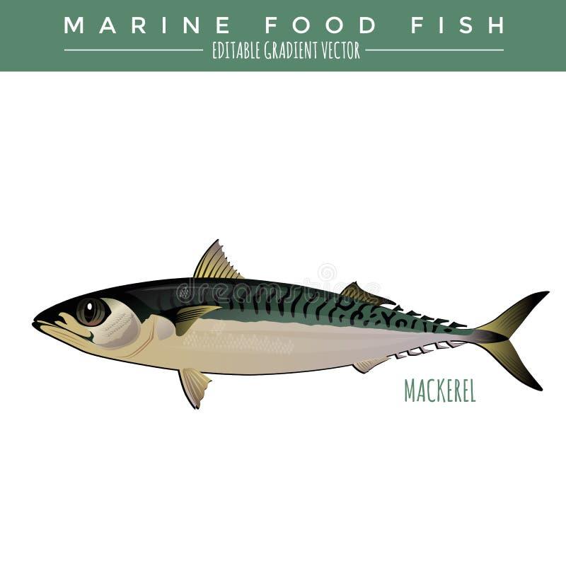 mackerel Marine Food Fish royaltyfri illustrationer