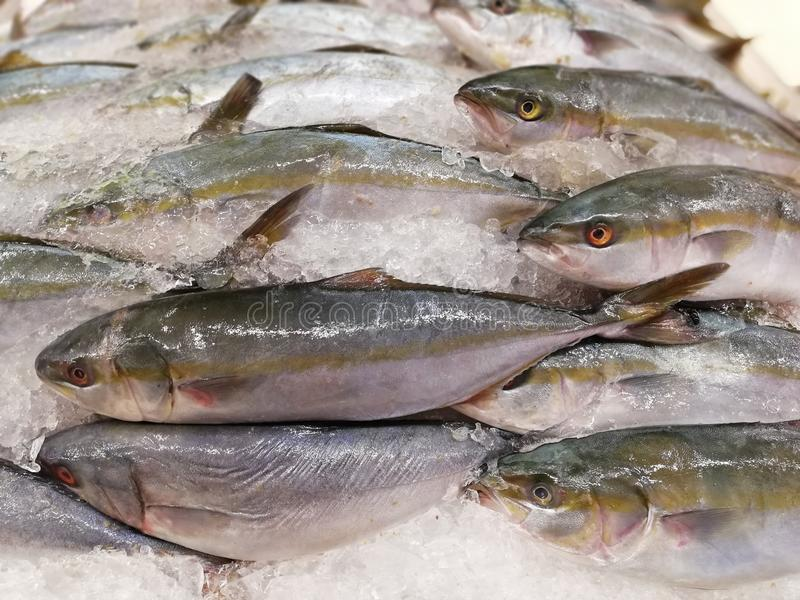 mackerel for sale royalty free stock images