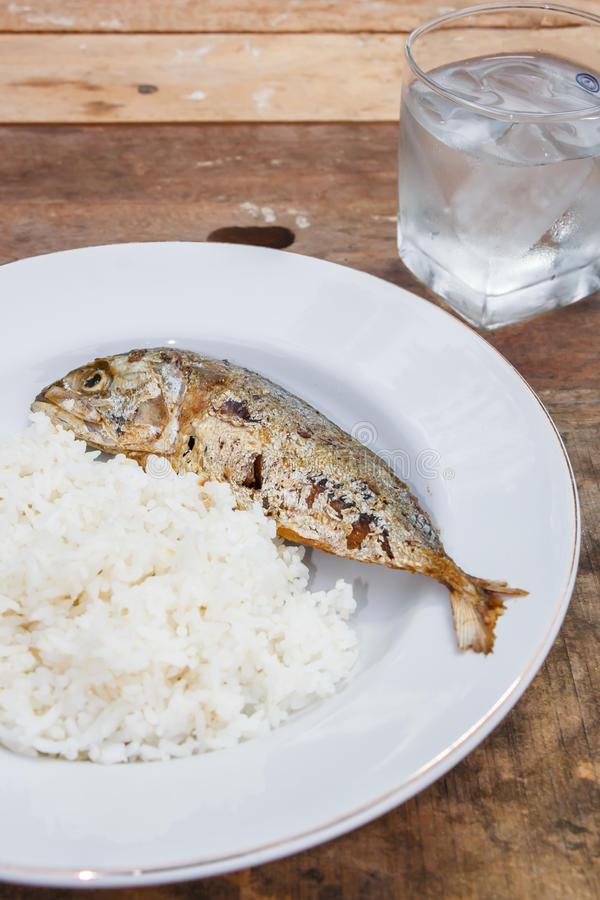 Mackerels. Fried Mackerel with rice for lunch or dinner royalty free stock images