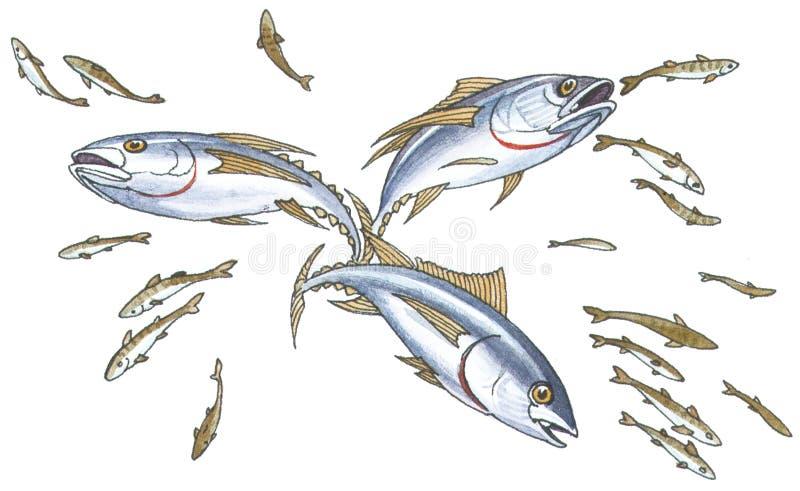 mackerelstim stock illustrationer