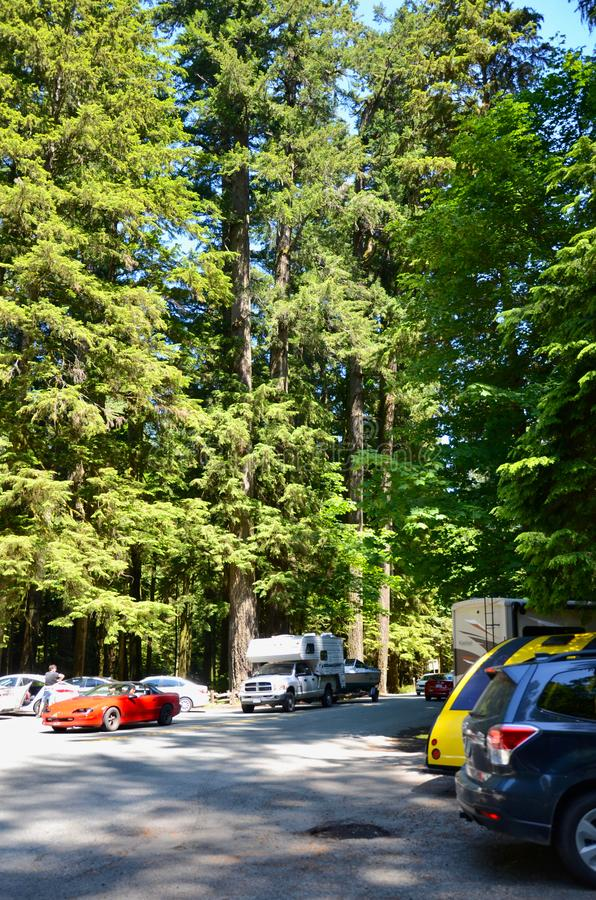 MacMillan Provincial Park, British Columbia, Canada- June 18, 2018. Tourists from all over the world came to see the famous forest. MacMillan Provincial Park royalty free stock photos