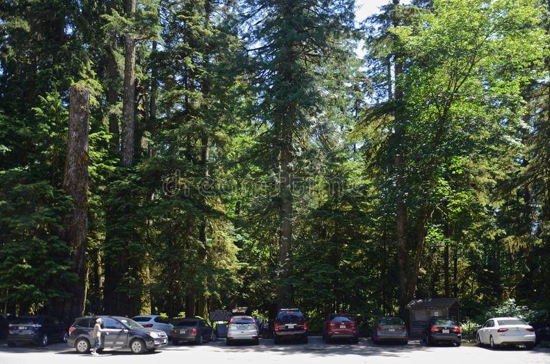 MacMillan Provincial Park, British Columbia, Canada- June 18, 2018. Tourists from all over the world came to see the famous forest. MacMillan Provincial Park stock photos