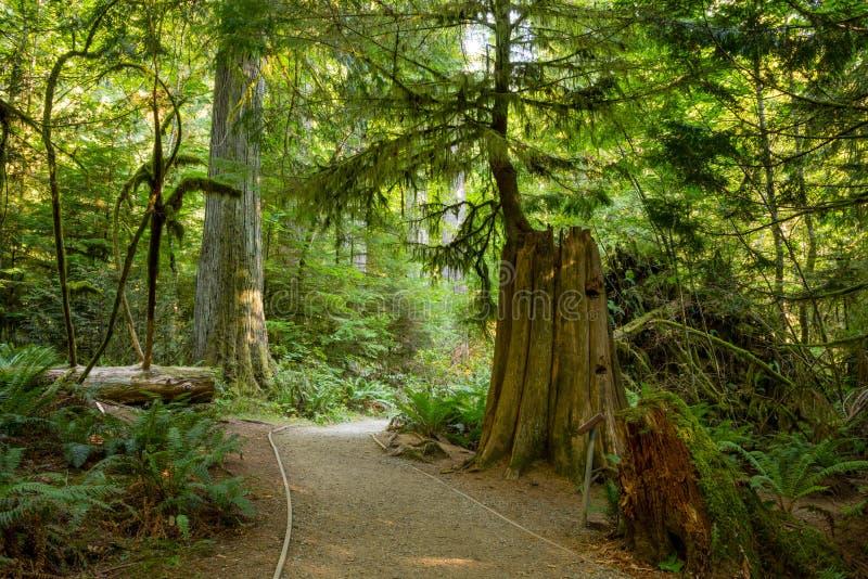 MacMillan Provincial Park stock photos