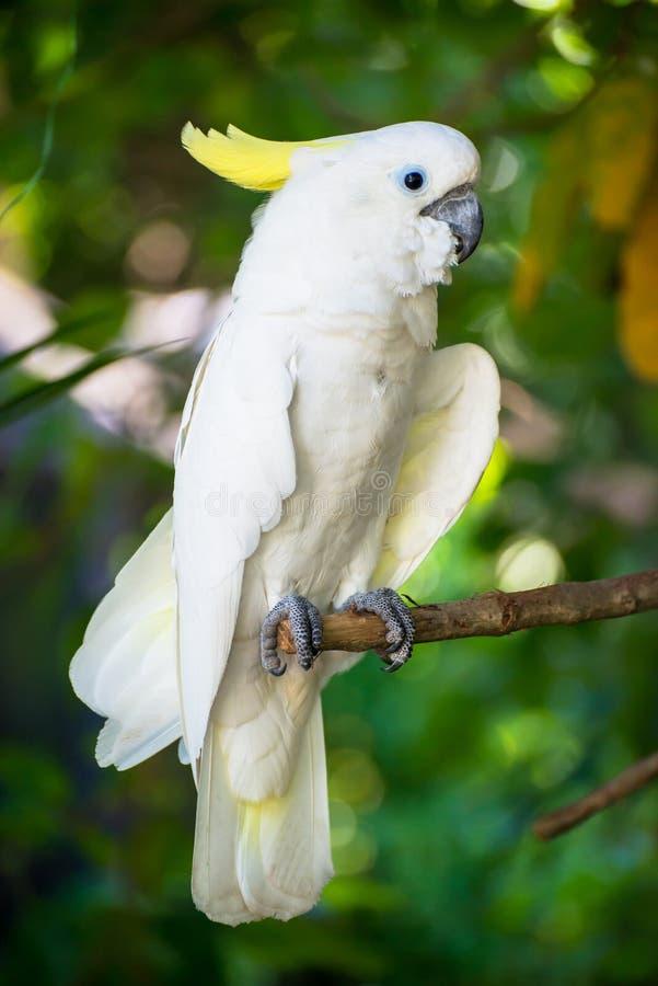 Macow鹦鹉 免版税图库摄影