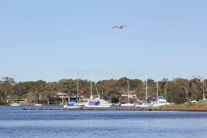 Macquarie do lago imagens de stock
