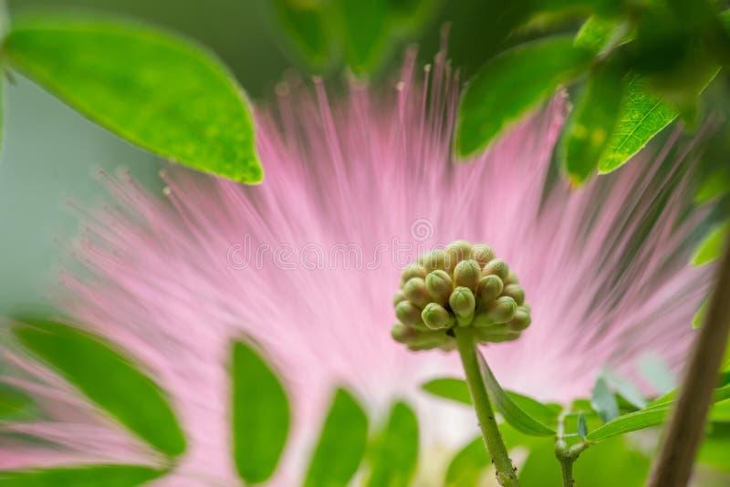 Macro étamine abstraite de fleur photo stock