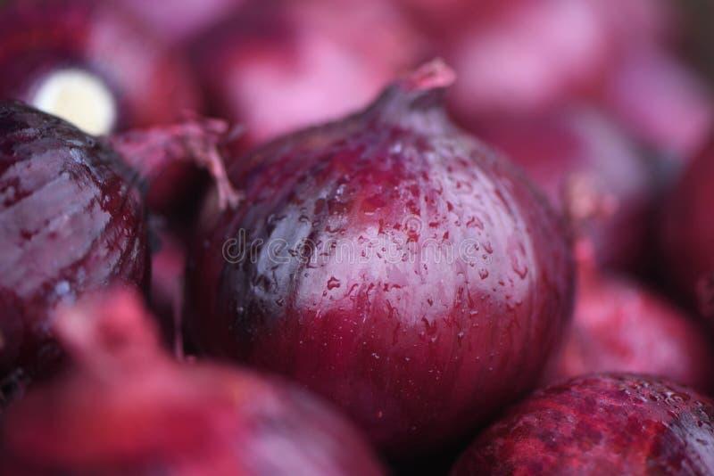 Macro étroit des oignons pourpres frais sous la pluie photos libres de droits