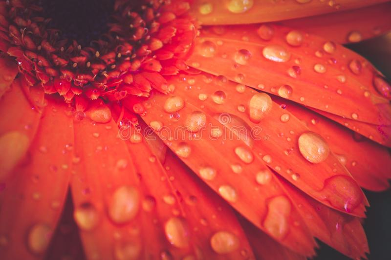 Macro abstract background texture droplets on flower petals stock photography